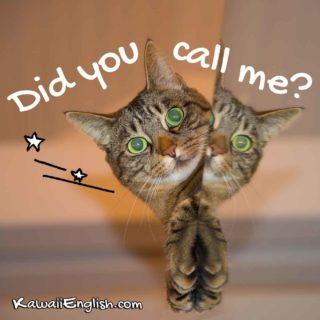 Did you call me?