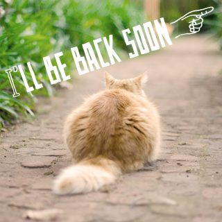 I'll be back soon.