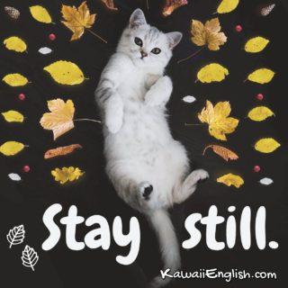 Stay still.